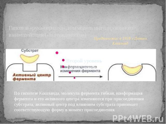 Гипотеза «рука-перчатка», или модель индуцированного взаимодействия («вынужденного»)