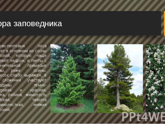 Флора заповедника Кедрово-пихтовые леса состоят в основном из сосны сибирской, которую чаще называют кедром, и пихты с незначительной примесью березы, реже - осины. Подлесок слабо выражен, в его сложении участвуют смородины - темно-пурпуровая и крас…