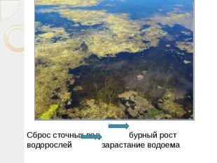 Сброс сточных вод бурный рост водорослей зарастание водоема