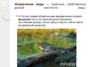 Аборигенные виды — коренные, свойственные данной местности виды. В России такими