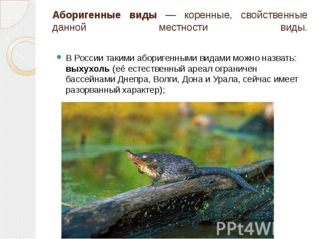 Аборигенные виды — коренные, свойственные данной местности виды. В России такими аборигенными видами можно назвать: выхухоль (её естественный ареал ограничен бассейнами Днепра, Волги, Дона и Урала, сейчас имеет разорванный характер);