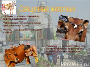 Коровы— это самые священные животные для индусов Индусы верят, что все боги и б