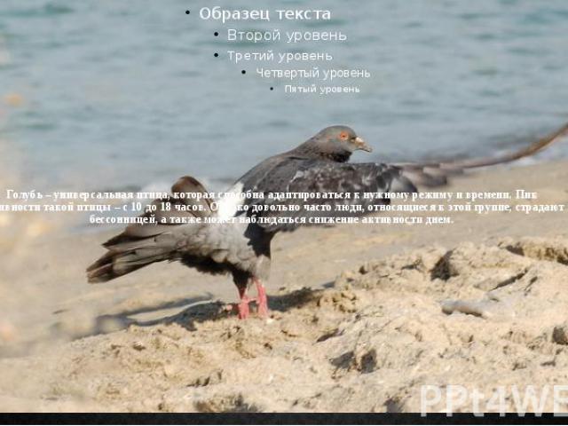 Голубь – универсальная птица, которая способна адаптироваться к нужному режиму и времени. Пик активности такой птицы – с 10 до 18 часов. Однако довольно часто люди, относящиеся к этой группе, страдают бессонницей, а также может наблюдаться снижение …