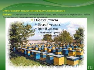 Сейчас для пчёл создают необходимые условия на пасеках.Сейчас для пчёл создают н