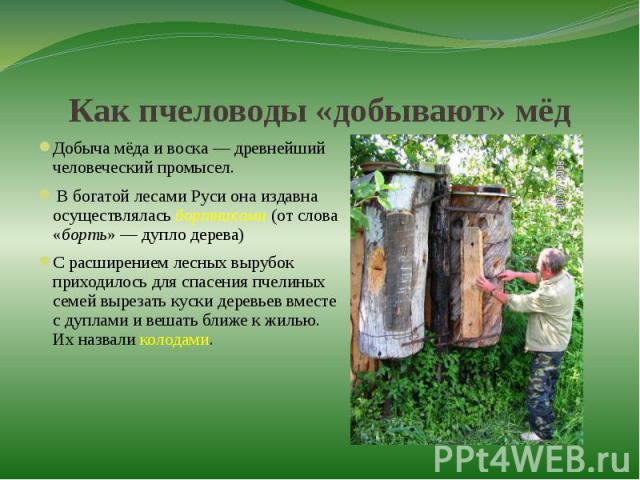 Как пчеловоды «добывают» мёдДобыча мёда и воска — древнейший человеческий промысел. В богатой лесами Руси она издавна осуществлялась бортниками (от слова «борть» — дупло дерева) С расширением лесных вырубок приходилось для спасения пчелиных семей вы…
