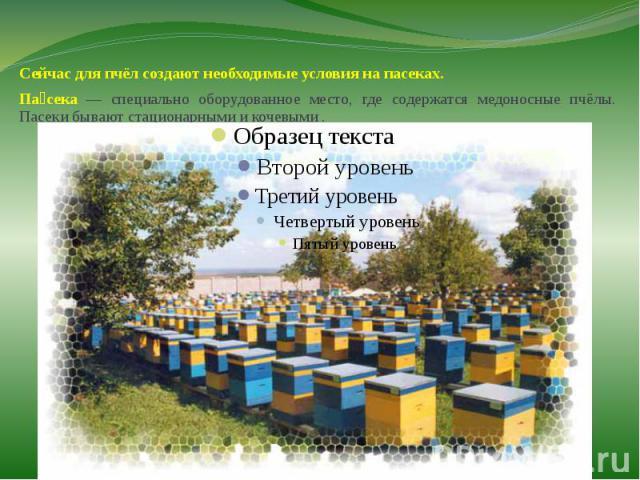 Сейчас для пчёл создают необходимые условия на пасеках.Сейчас для пчёл создают необходимые условия на пасеках.Пасека — специально оборудованное место, где содержатся медоносные пчёлы. Пасеки бывают стационарными и кочевыми .