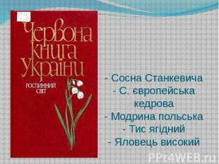 - Сосна Станкевича - С. європейська кедрова - Модрина польська - Тис ягідний - Я