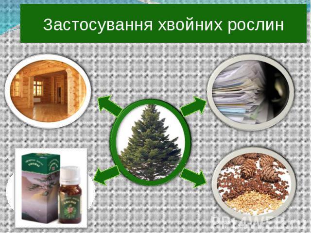 Застосування хвойних рослин