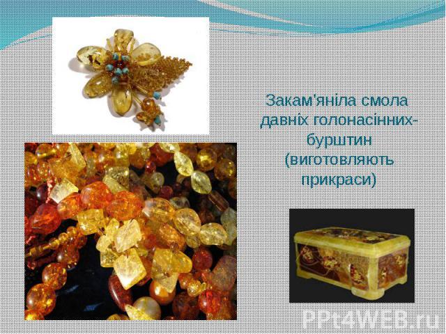 Закам'яніла смола давніх голонасінних-бурштин (виготовляють прикраси)