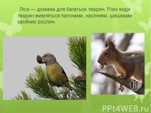 Ліси — домівка для багатьох тварин. Різні види тварин живляться пагонами, насінн