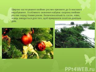 Широке застосування хвойних рослин призвело до їх масового вирубування. Особливо