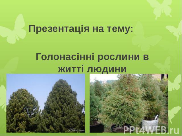 Голонасінні рослини в житті людини Презентація на тему: