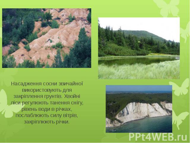 Насадження сосни звичайної використовують для закріплення грунтів. Хвойні ліси регулюють танення снігу, рівень води в річках, послаблюють силу вітрів, закріплюють річки.