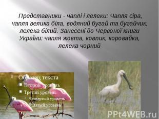 Представники - чаплі і лелеки: Чапля сіра, чапля велика біла, водяний буга