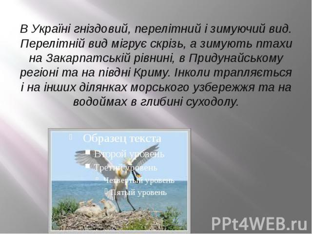 В Україні гніздовий, перелітний і зимуючий вид. Перелітній вид мігрує скрізь, а зимують птахи на Закарпатській рівнині, в Придунайському регіоні та на півдні Криму. Інколи трапляється і на інших ділянках морського узбережжя та на водоймах в глибині …