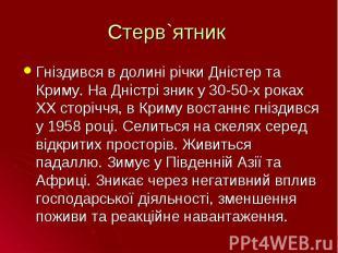 Гніздився в долині річки Дністер та Криму. На Дністрі зник у 30-50-х роках ХХ ст