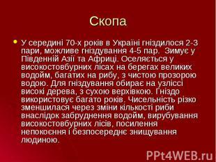 У середині 70-х років в Україні гніздилося 2-3 пари, можливе гніздування 4-5 пар