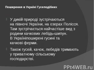 Поширення в Україні Гусеподібних У дикій природі зустрічаються напівночі&n