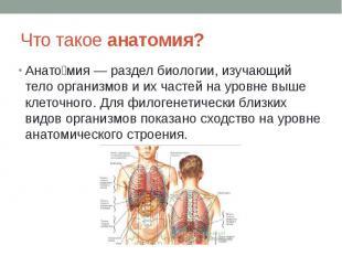 Что такое анатомия? Анато мия — раздел биологии, изучающий тело организмов и их