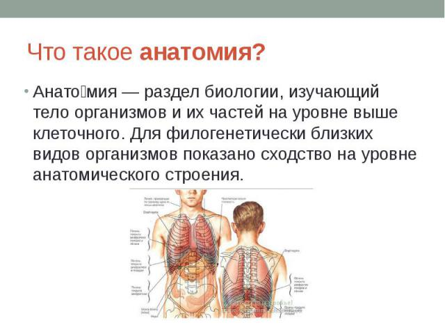 Что такое анатомия? Анато мия — раздел биологии, изучающий тело организмов и их частей на уровне выше клеточного. Для филогенетически близких видов организмов показано сходство на уровне анатомического строения.