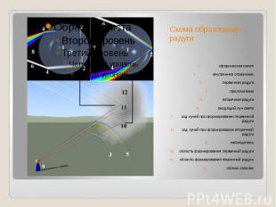 Схема образования радугисферическаякаплявнутреннееотражениепервичная