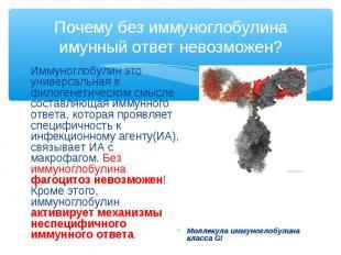 Иммуноглобулин это универсальная в филогенетическом смысле составляющая иммунног