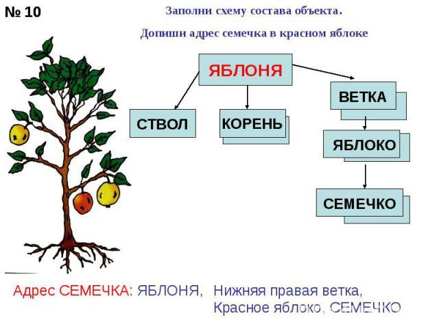 Заполни схему состава объекта.Допиши адрес семечка в красном яблоке