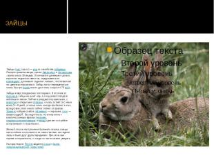 ЗАЙЦЫ Зайцы(лат.Lepus)—родиз семействазайцев