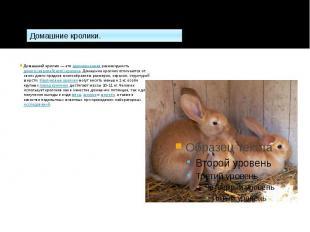 Домашний кролик— этоодомашненнаяразновидностьдикого (евр