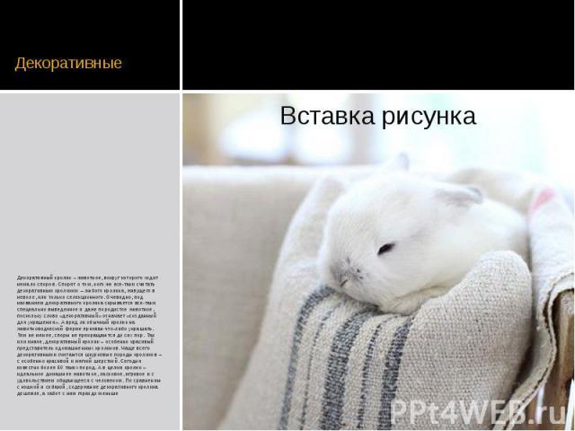 Декоративные Декоративный кролик – животное, вокруг которого ходит немало споров. Спорят о том, кого же все-таки считать декоративным кроликом – любого кролика, живущего в неволе, или только селекционного. Очевидно, под названием декоративного кроли…