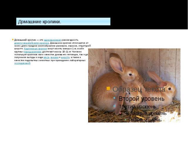 Домашний кролик— этоодомашненнаяразновидностьдикого (европейского) кролика. Домашние кролики отличаются от своих диких предков многообразием размеров, окрасов, структурой шерсти.Карликовые кроликимогут весить мень…