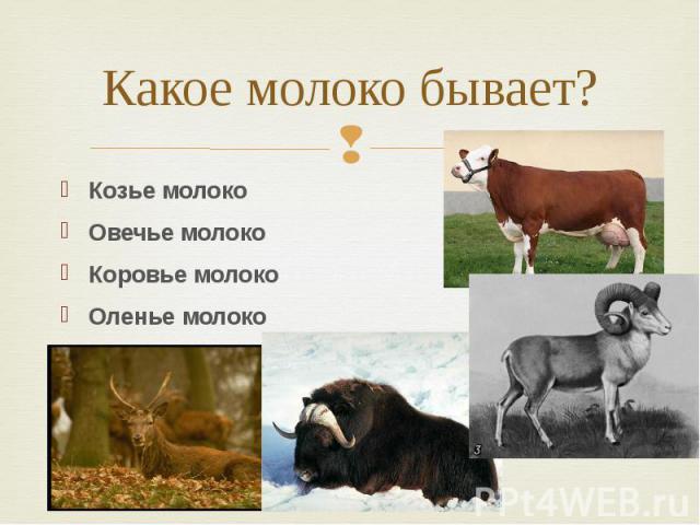 Какое молоко бывает? Козье молоко Овечье молоко Коровье молоко Оленье молоко Яка молоко