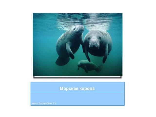 Морская корова Автор: Родина Вера 5 Б