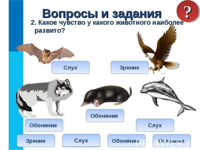 2. Какое чувство у какого животного наиболее развито? 2. Какое чувство у какого животного наиболее развито?