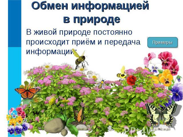 В живой природе постоянно происходит приём и передача информации: В живой природе постоянно происходит приём и передача информации: