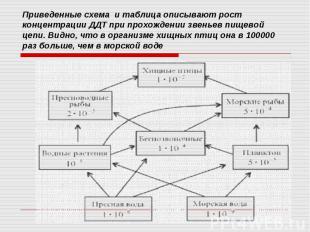 Приведенные схема и таблица описывают рост концентрации ДДТ при прохождении звен