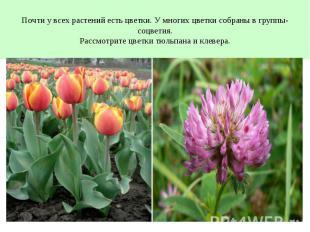 Почти у всех растений есть цветки. У многих цветки собраны в группы- соцветия.Ра