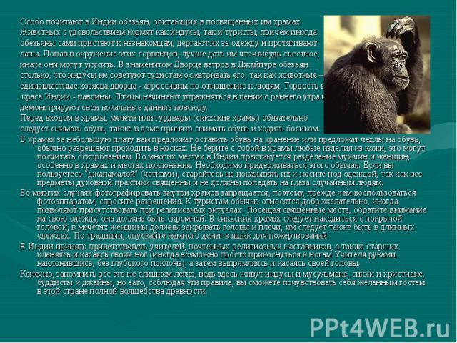 Особо почитают в Индии обезьян, обитающих в посвященных им храмах. Животных с удовольствием кормят как индусы, так и туристы, причем иногда обезьяны сами пристают к незнакомцам, дергают их за одежду и протягивают лапы. Попав в окружение этих сорванц…