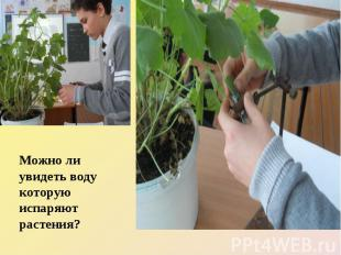 Можно ли увидеть воду которую испаряют растения?