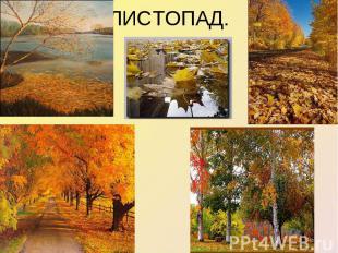ЛИСТОПАД.