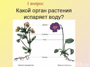 1 вопрос Какой орган растения испаряет воду?