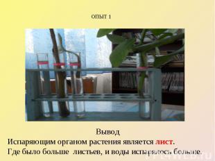 ОПЫТ 1 Вывод Испаряющим органом растения является лист. Где было больше листьев,