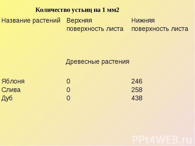 Количество устьиц на 1 мм2