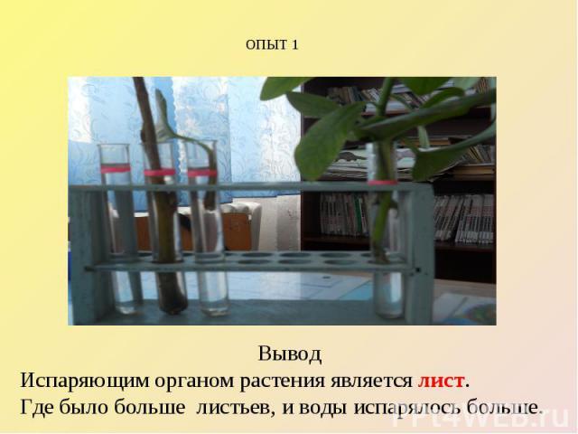 ОПЫТ 1 Вывод Испаряющим органом растения является лист. Где было больше листьев, и воды испарялось больше.