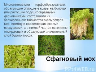 Сфагновый мохМноголетние мхи — торфообразователи, образующие сплошные ковры на б