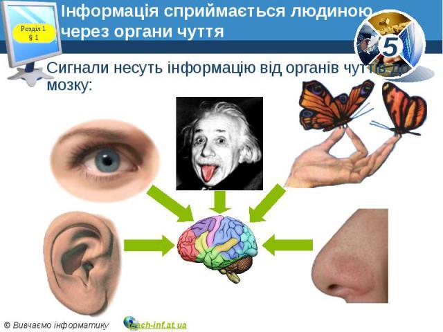 Інформація сприймається людиною через органи чуття