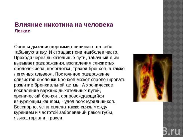 Влияние никотина на человека Легкие