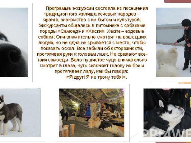 Программа экскурсии состояла из посещения традиционного жилища кочевых народов – яранга, знакомство с их бытом и культурой. Экскурсанты общались в питомнике с собаками породы «Самоед» и «Хаски». Хаски – ездовые собаки. Они внимательно смотрят на вош…