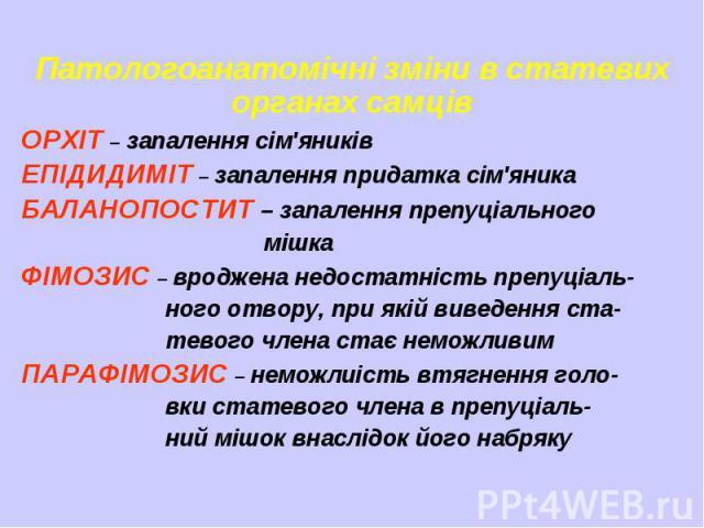 Патологоанатомічні зміни в статевих органах самців ОРХІТ – запалення сім'яників ЕПІДИДИМІТ – запалення придатка сім'яника БАЛАНОПОСТИТ – запалення препуціального мішка ФІМОЗИС – вроджена недостатність препуціаль- ного отвору, при якій виведення ста-…