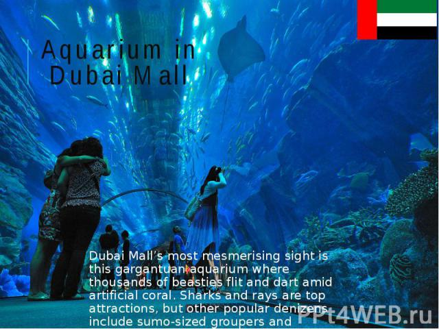 Aquarium in Dubai Mall Dubai Mall's most mesmerising sight is this gargantuan aquarium where thousands of beasties flit and dart amid artificial coral. Sharks and rays are top attractions, but other popular denizens include sumo-sized groupers and m…